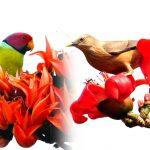 একুশে ফেব্রুয়ারী আর নয় স্মৃতিচারণ আটই ফাল্গুন- শ্রী অরবিন্দ ধর